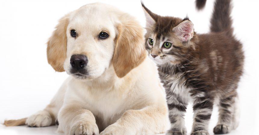 Pourquoi souscrire à une mutuelle animaux ?