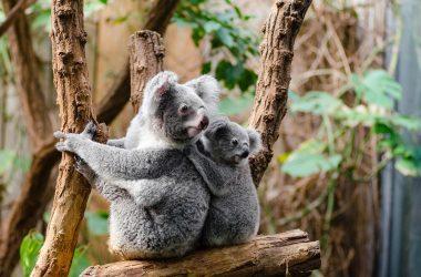 Destination touristique pour les passionnés d'animaux